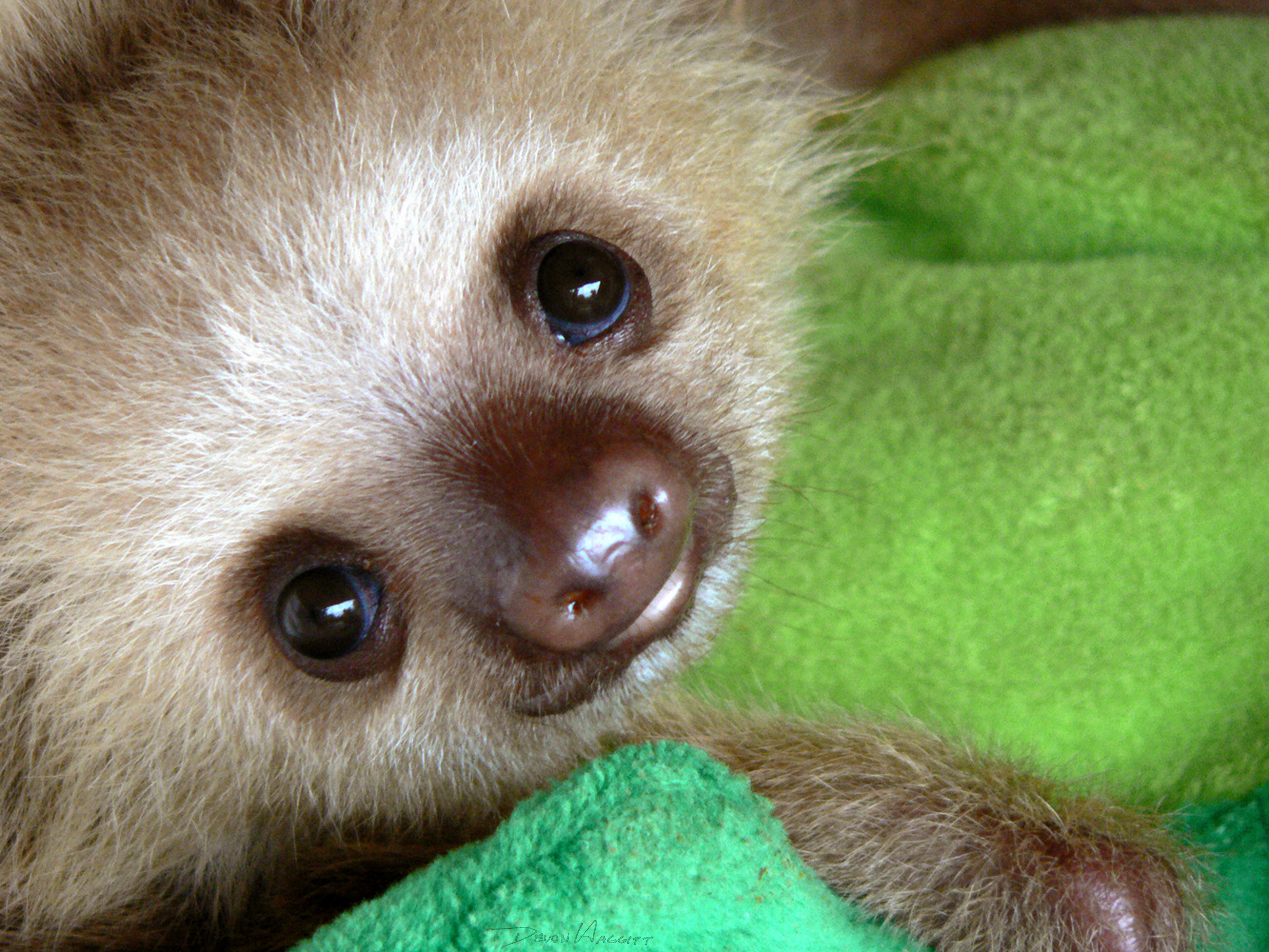 Watch gt kristen bell s funny sloth footage hilarious or ridiculous